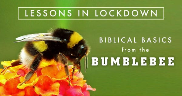 Lessons in Lockdown: Biblical Basics from the Bumblebee